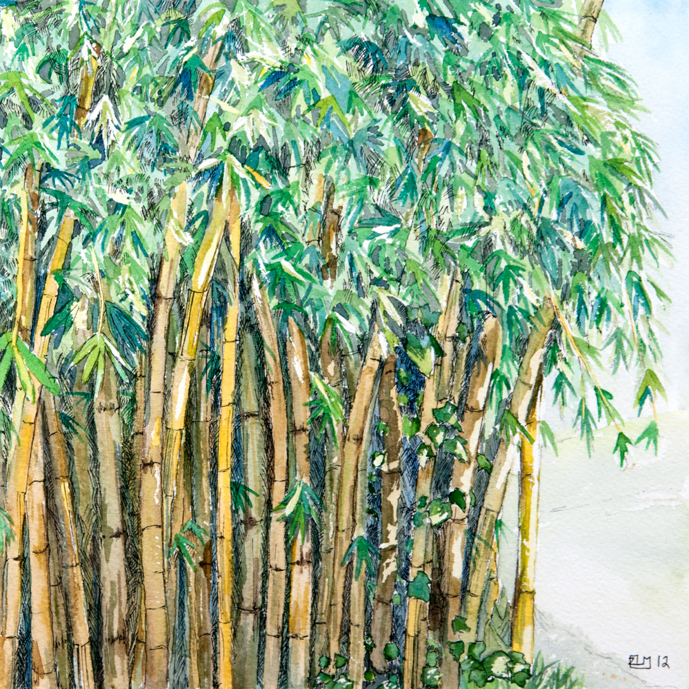 watercolor painting by Rebekah Nicholas of a stand of bamboo in the midday sun