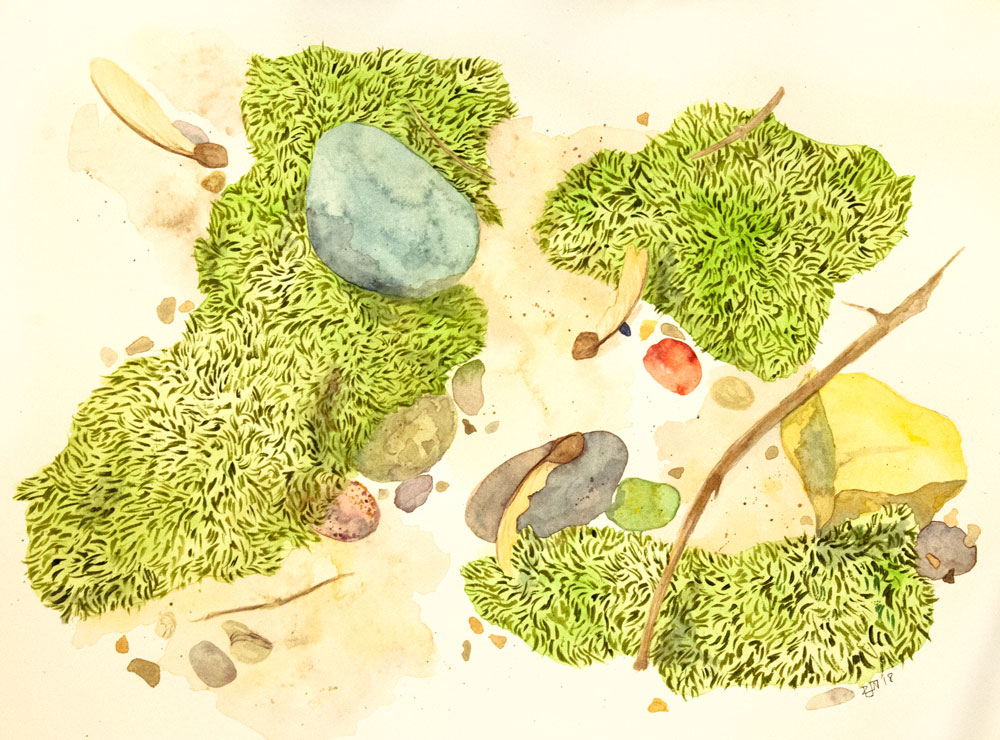 watercolor painting by Rebekah Nicholas of the forest floor with maple seedlings and moss